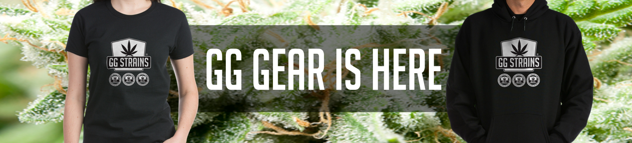 GG-Gear-Here—Gorilla-Glue-Strains-Gear