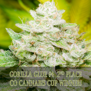 2nd Place 2016 CO High Times Cannabis Cup