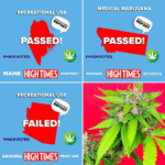 Regulated Legalization & Legalized Medical Cannabis